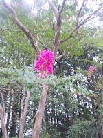 お花~その2~
