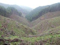 金比羅尾根からの景色